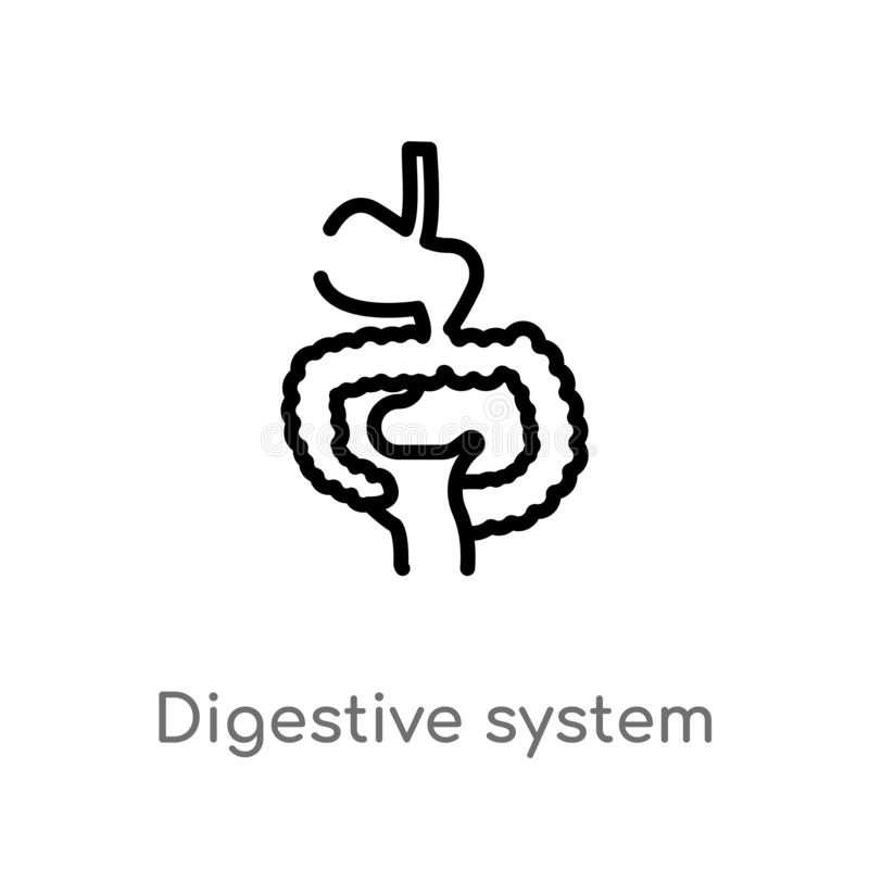 outline digestive system vector icon. isolated black simple line element illustration from human body parts concept. editable royalty free illustration