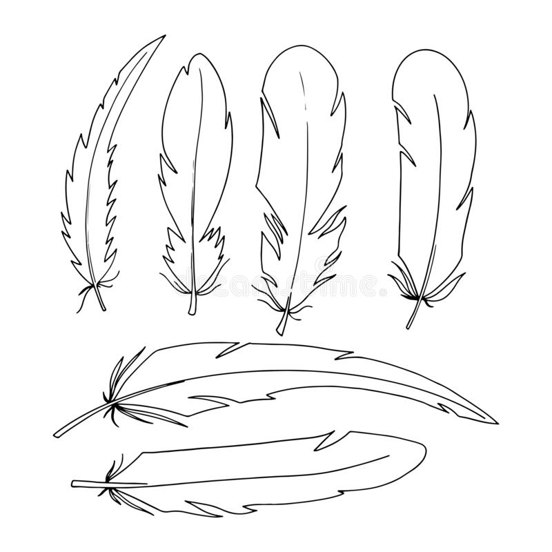 Outline Feather Stock Illustrations 27 672 Outline Feather Stock Illustrations Vectors Clipart Dreamstime Top free images & vectors for feather outline in png, vector, file, black and white, logo, clipart, cartoon and transparent. dreamstime com