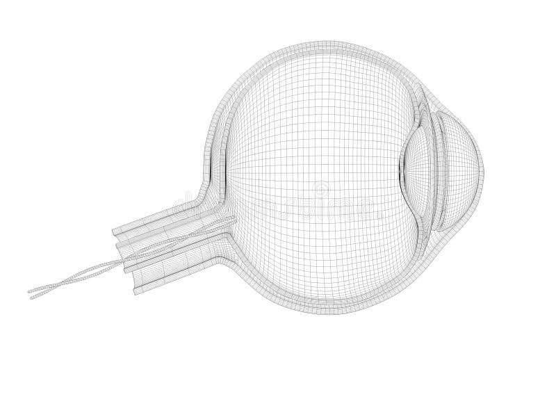 Outline eye plan. 3d Illustration for institution or presentation.  royalty free illustration