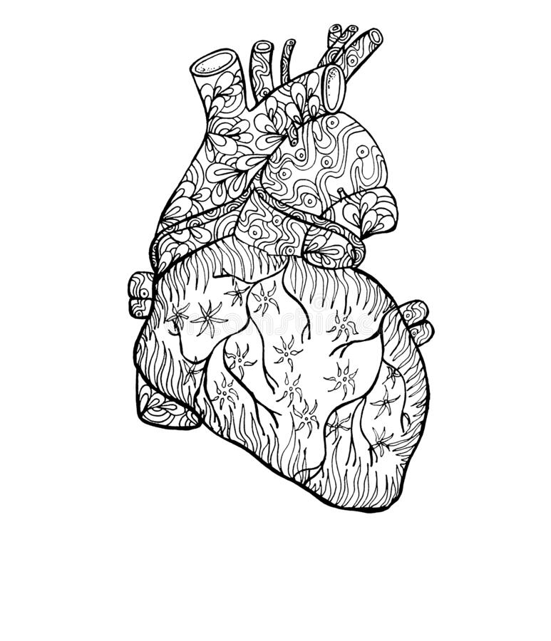 Outline Human Heart With Fantasy Patterns, Anatomy ...