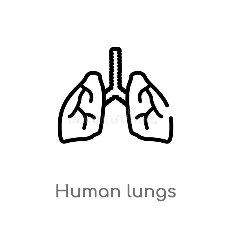 outline human lungs vector icon. isolated black simple line element illustration from human body parts concept. editable vector vector illustration