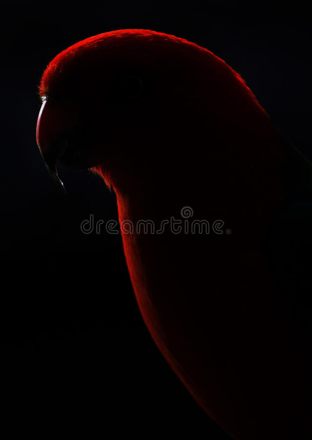 Outline Of A Parrot Stock Photos