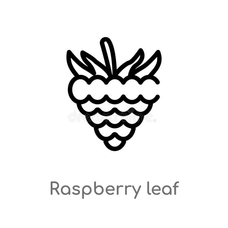 outline raspberry leaf vector icon. isolated black simple line element illustration from food concept. editable vector stroke stock illustration