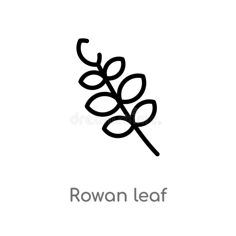 outline rowan leaf vector icon. isolated black simple line element illustration from nature concept. editable vector stroke rowan stock illustration