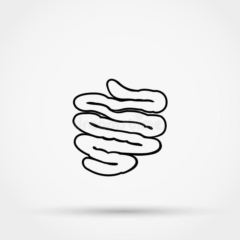 Outline small intestine vector icon. royalty free illustration