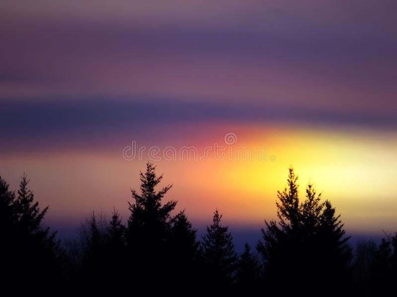 The outline of the trees in purple sky stock photography