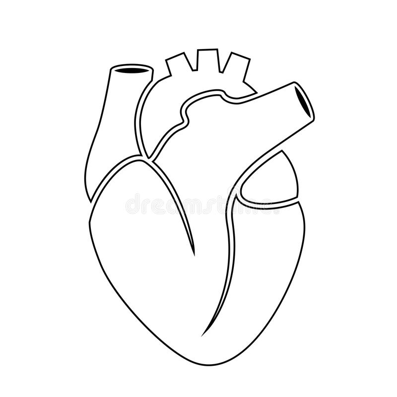outline vector icon of human heart stock vector illustration of rh dreamstime com human heart outline diagram human heart outline printable