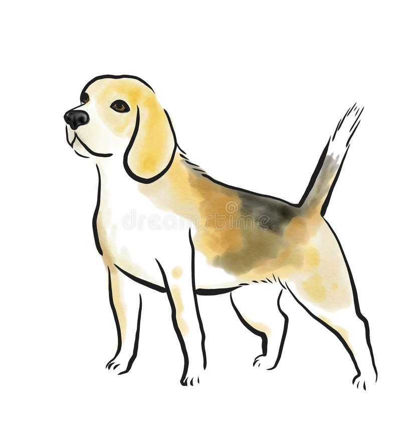 Beagle dog. Outline watercolor beagle dog breed isolated on white vector illustration