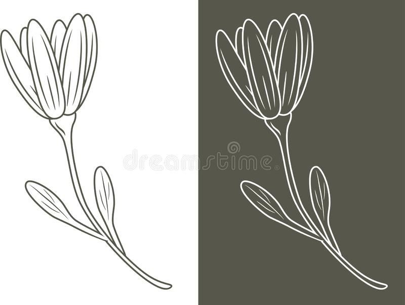 Outlined flower isolated on white and dark background royalty free stock photos