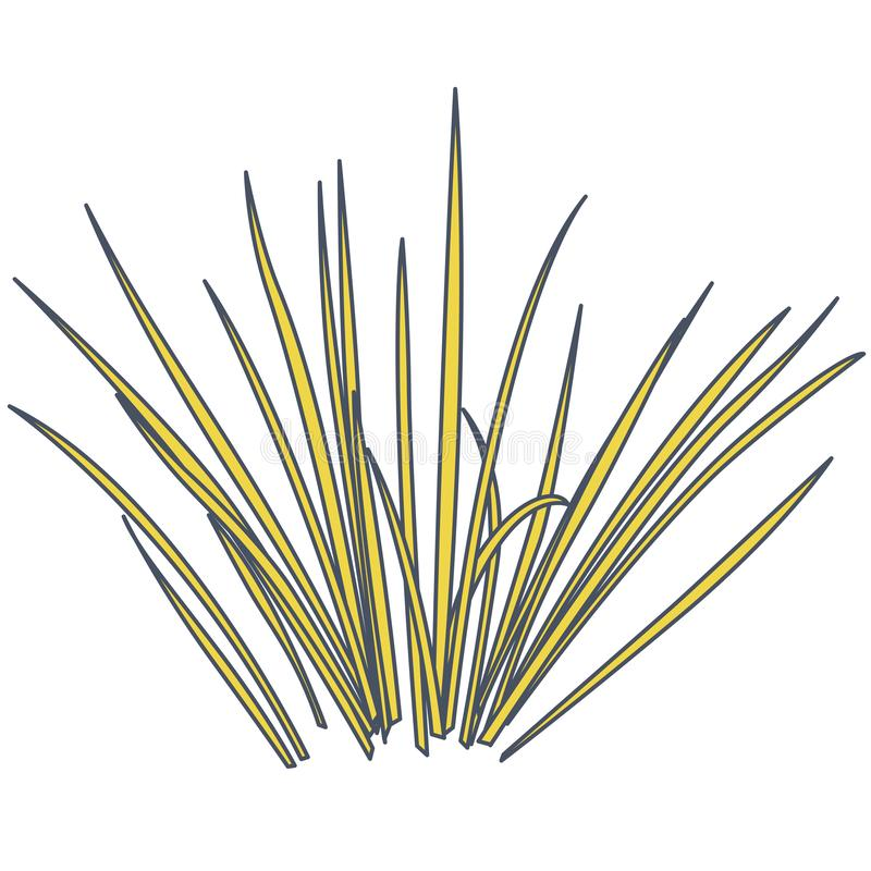 Outlined vector isolated reed. Water plants in different variants, white background. Outlined vector isolated reed. Yellow water plants in different variant royalty free illustration