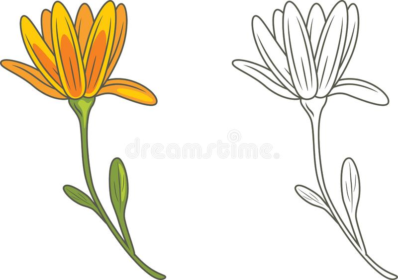 Outlined and yellow flower isolated on white royalty free stock photography
