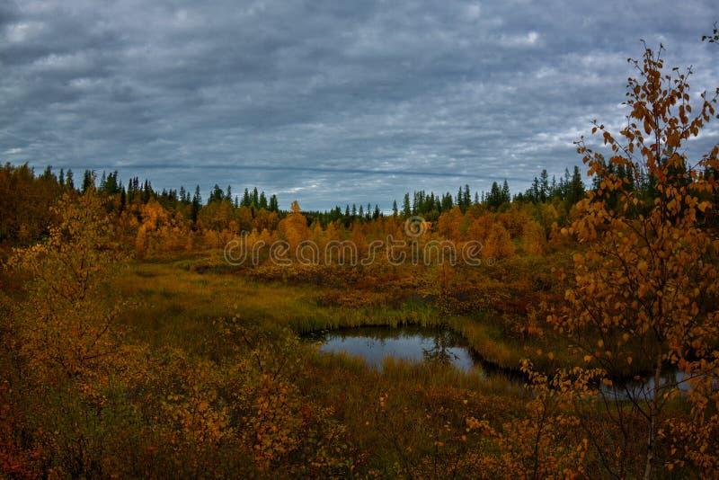 outono ártico mágico no norte distante do russo com lago imagens de stock royalty free