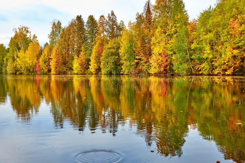 outono, árvores amarelas, água, imagens de stock royalty free