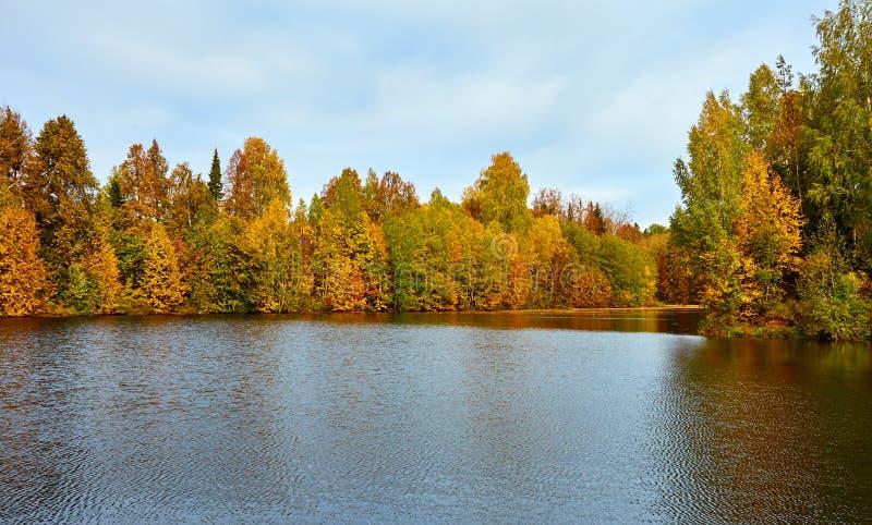 outono, árvores amarelas, água, imagem de stock royalty free