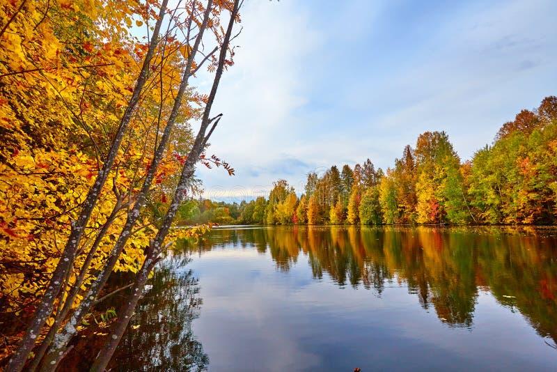 outono, árvores amarelas, água fotografia de stock royalty free