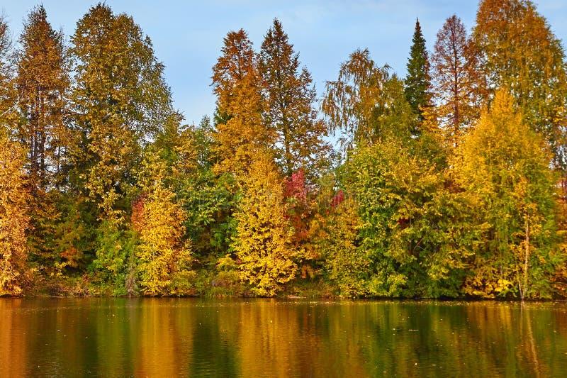 outono, árvores amarelas, água, imagens de stock