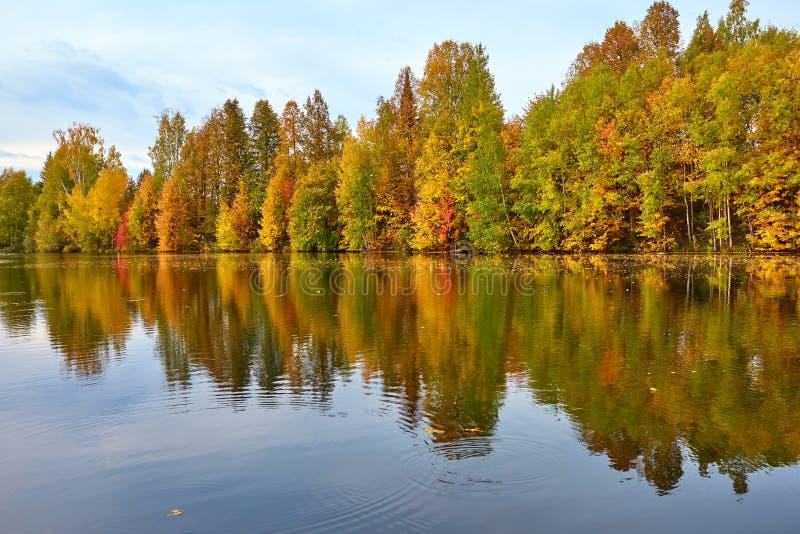 outono, árvores amarelas, água foto de stock royalty free