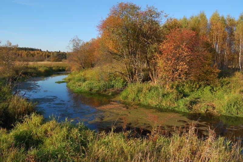 Outono. árvores amarelas do rio foto de stock