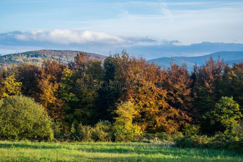 outono Árvores coloridas na beira da floresta Montes, filelds do co imagens de stock