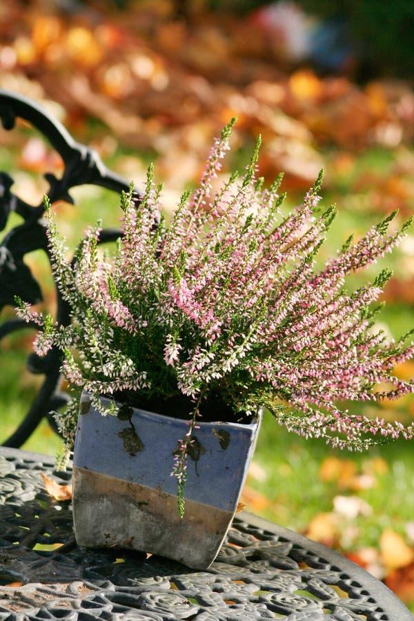 Outono fotos de stock royalty free