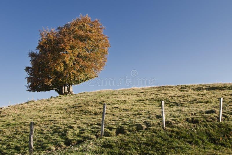 Download Outono imagem de stock. Imagem de grama, azul, nuvens - 26506845