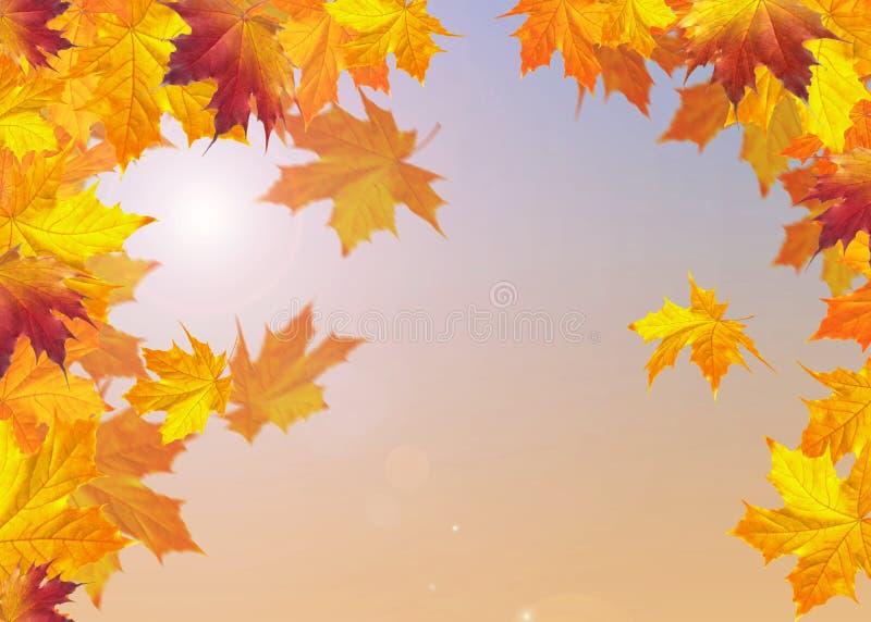Download OUTONO foto de stock. Imagem de retrato, vista, árvore - 26508226
