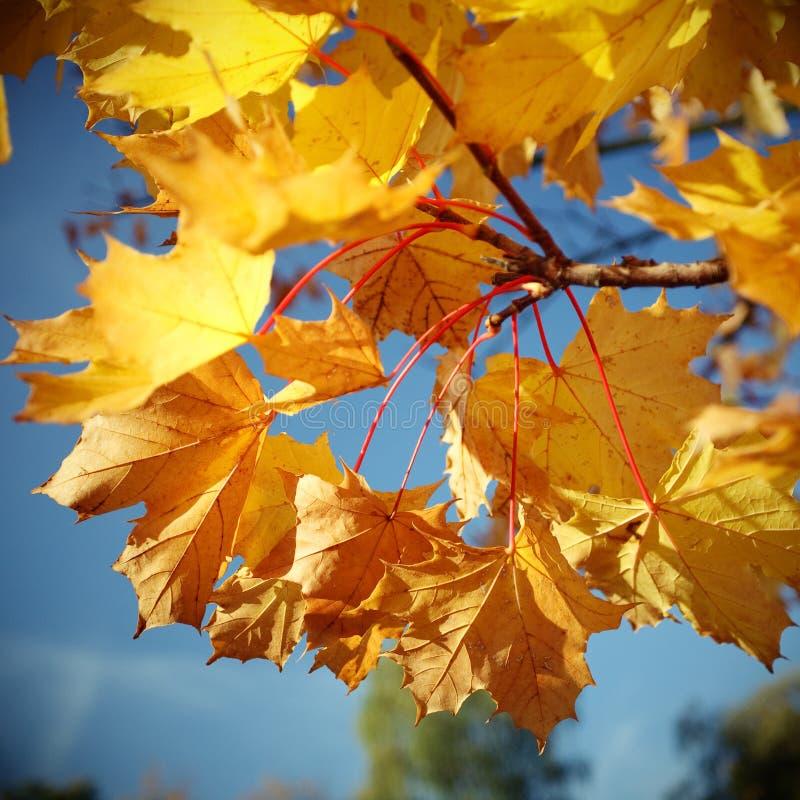 Outono fotografia de stock royalty free