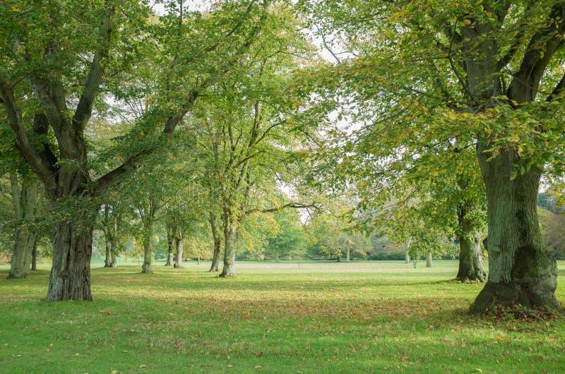 Outono adiantado fotografia de stock