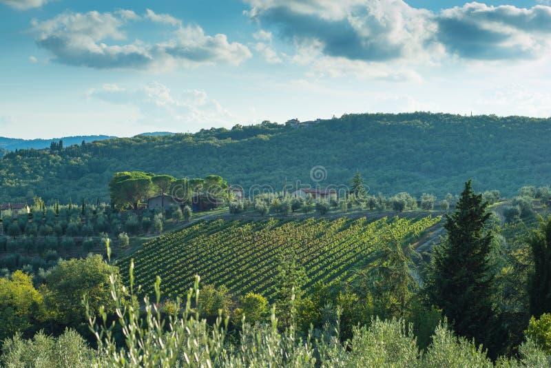 outono adiantado do vinhedo do montanhês de Tuscan com casas fotos de stock