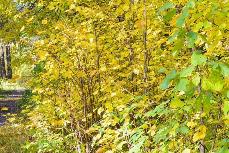 Outono adiantado na floresta fotografia de stock