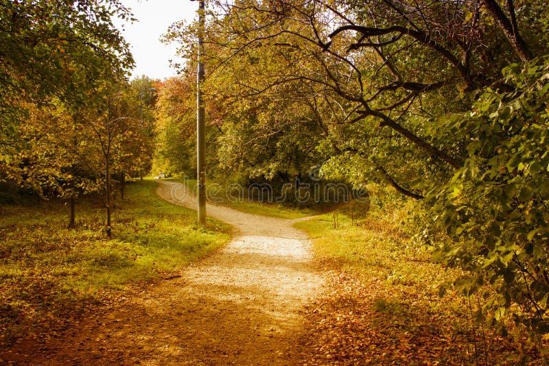 Outono amarelo imagens de stock royalty free