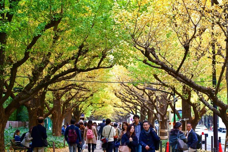 outono atrasado de Meiji Jingu Gaien Avenue During do T?quio foto de stock
