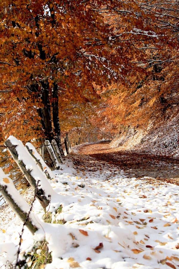 Outono atrasado no lado contry imagens de stock