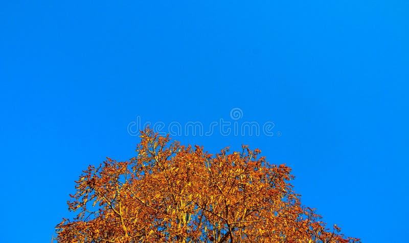 Outono azul fotos de stock