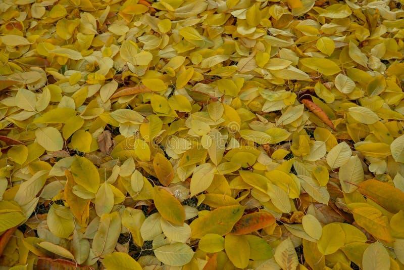 Outono, belas estações, folhas coloridas e manhãs nebulosas imagem de stock royalty free