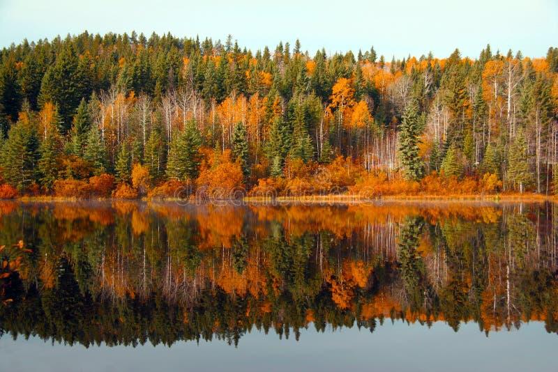 Outono bonito fotografia de stock royalty free