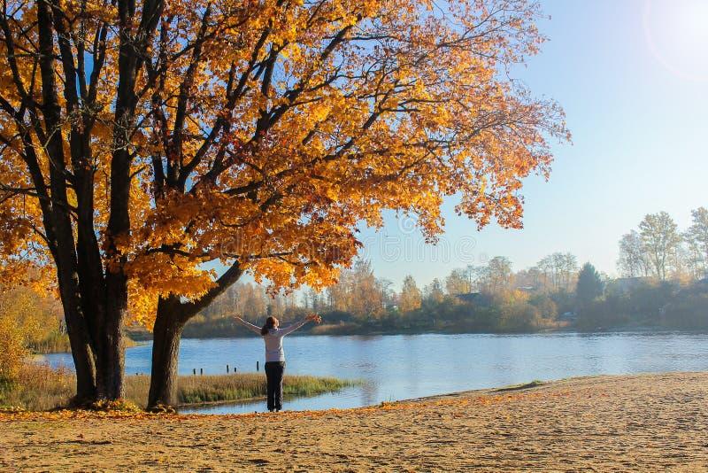Outono brilhante Foto ensolarada de uma menina que aprecie o outono e um bom dia um grande carvalho com folhas douradas imagens de stock royalty free