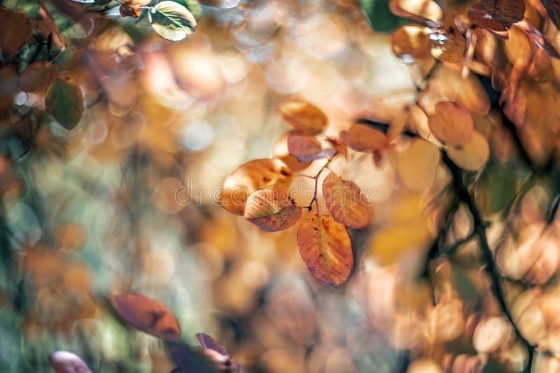 outono Bush macio cor-de-rosa em um dia ensolarado Foco seletivo Arte wallpaper Foco seletivo imagem de stock royalty free