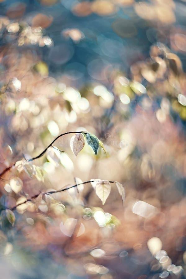 outono Bush macio cor-de-rosa de um beresklet em um dia ensolarado Foco seletivo Arte wallpaper Foco seletivo fotos de stock