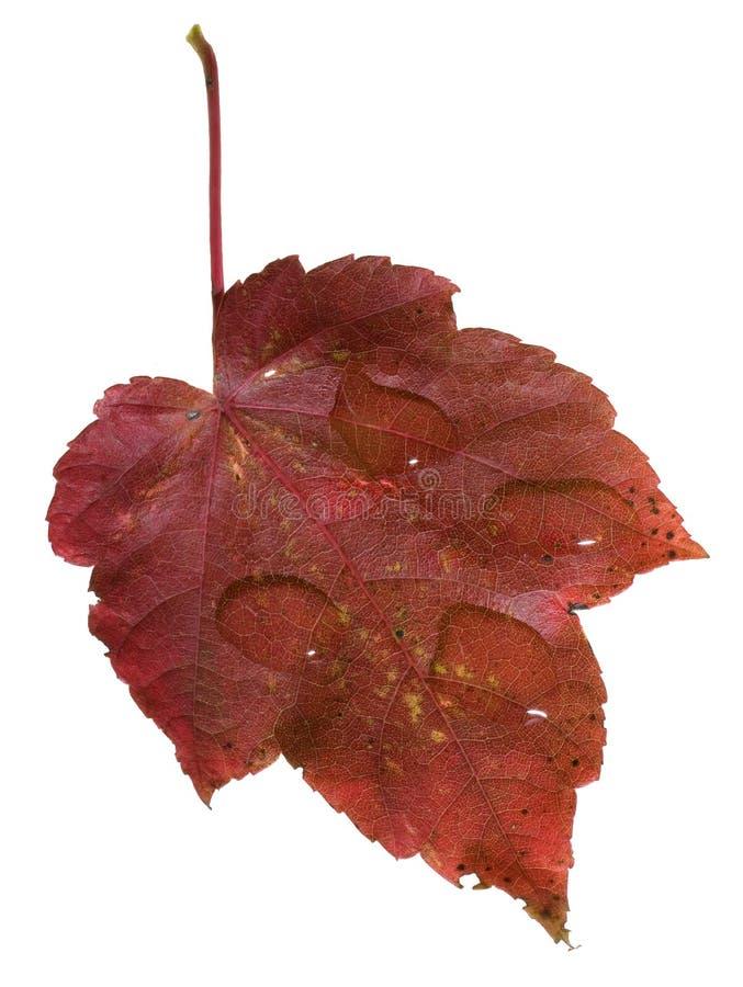 Outono chuvoso imagem de stock royalty free