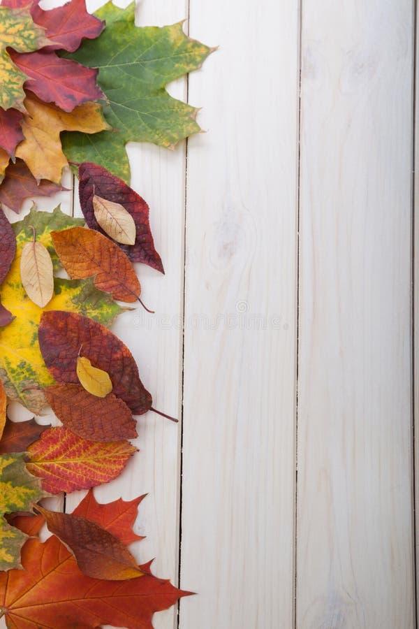 outono classificado na árvore com quadro da folha para palavras e insc foto de stock