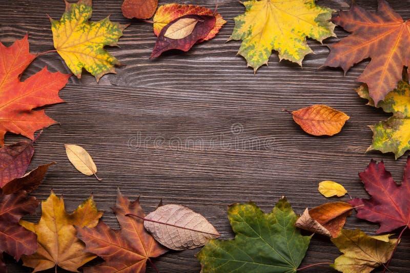 outono classificado na árvore com quadro da folha para palavras e insc fotografia de stock royalty free