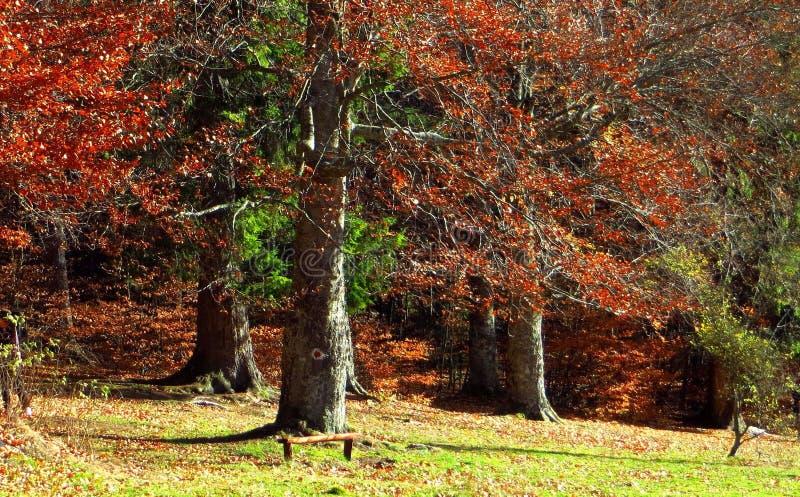 Outono colorido na floresta foto de stock royalty free