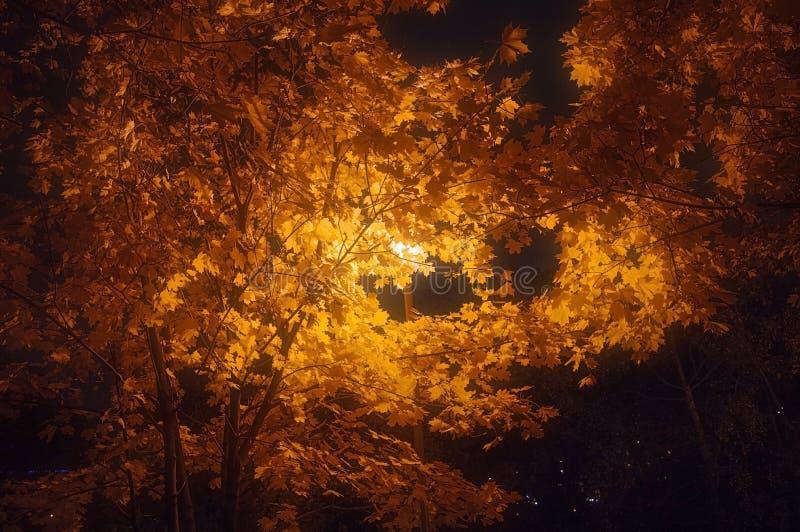 outono da noite fotografia de stock