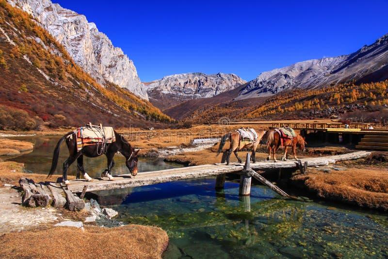 outono da paisagem fotos de stock