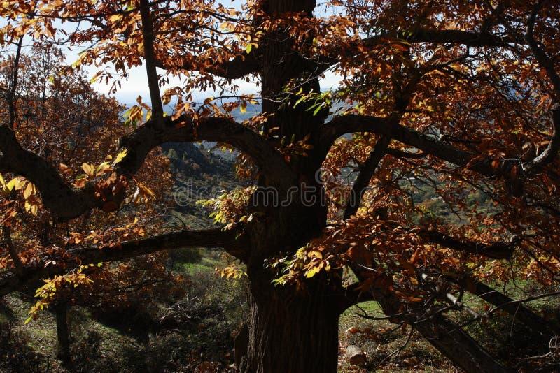 outono da serra de Madri, rocha grande perto 'de San Lorenzo de El Escorial ', do Monte 'Abantos ', Zarzalejo, cogumelo do Madri foto de stock