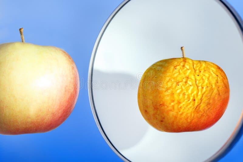 Outono da vida Enrugou-se e maçã fresca Conceito do envelhecimento da pele imagens de stock