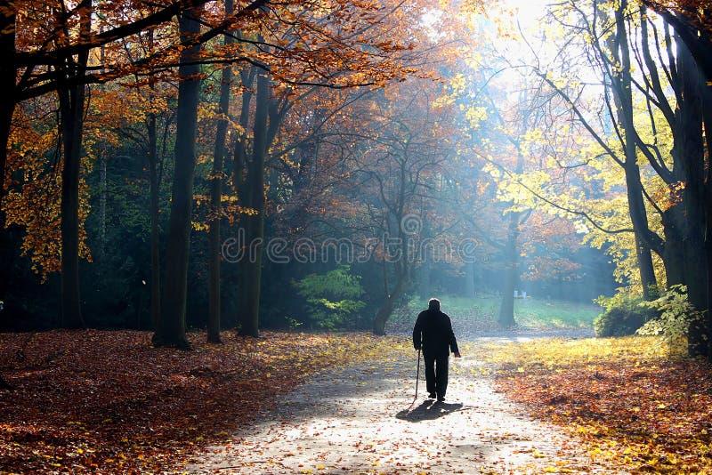 Outono da vida, homem sênior de passeio imagem de stock