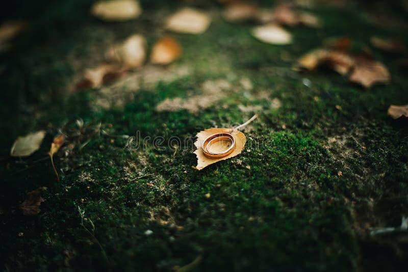 outono das folhas das alianças de casamento dos detalhes fotos de stock royalty free
