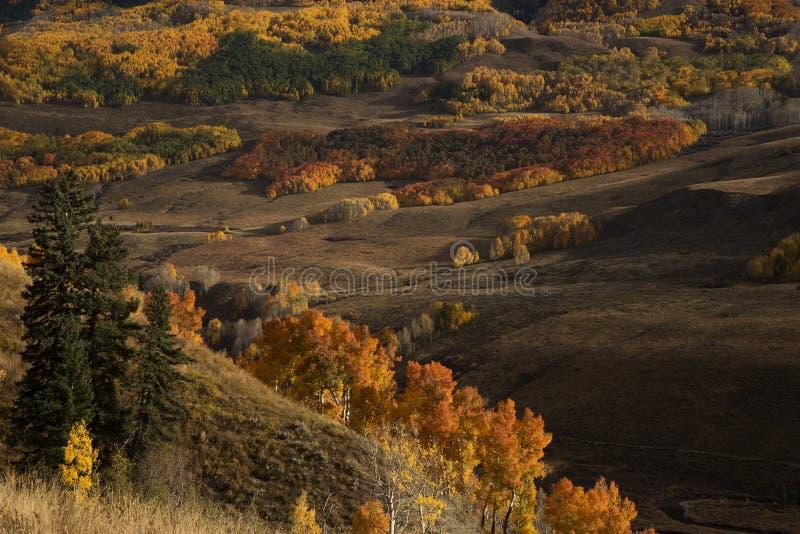 outono de Colorado imagem de stock